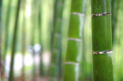 竹の節目iStock_000018539958XSmall